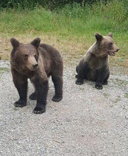 משפחת דובים מפוחלצת