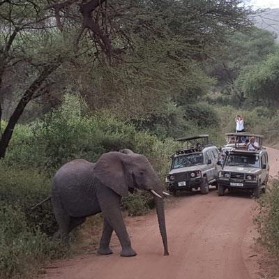 טיול ג'יפים בטנזניה